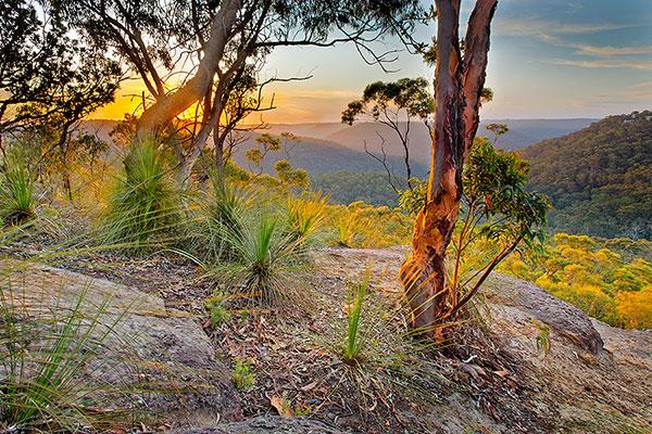 Andrew Barnes Landscape Photography - Berowra