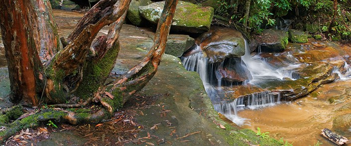 Andrew Barnes Landscape Photography - Somersby Tree and Falls