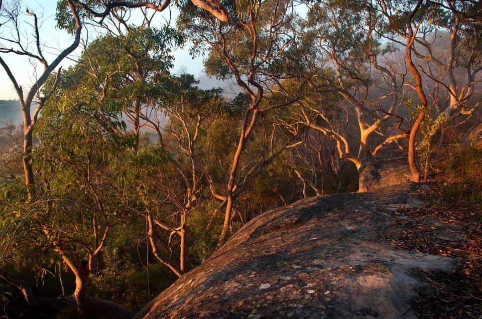 Australian Landscape Photography, Andrew Barnes Photography, Bush Photography, Berowra, Berowra Valley National Park