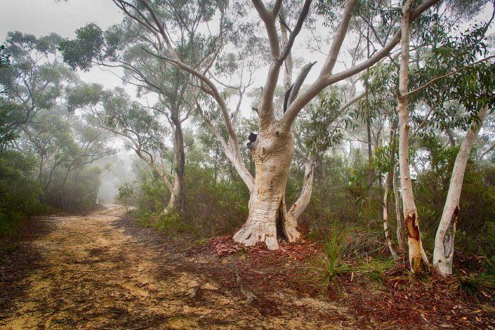 Berowra, Great North Walk, Australian Landscape Photography, Berowra Waters, Berowra Valley National Park