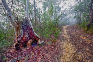 Turnaround, Berowra, Australian Landscape Photography, Berowra Waters, Berowra Valley National Park