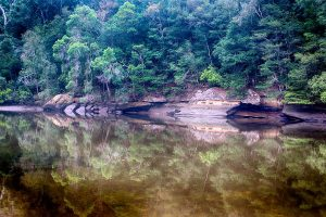 Crosslands, Hornsby, Hornsby Shire, Berowra Valley Regional Park, Landscape Photography