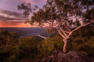 Sunse, looking into Berowra Valley National Park