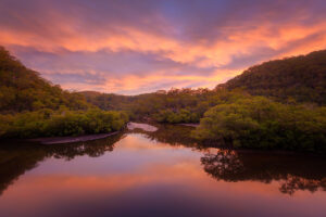 Cockle Creek Serenity